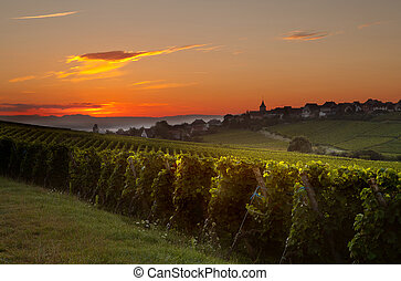 Summer morning in French vineyards