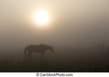 Summer morning mystery with horse, fog and sunrise