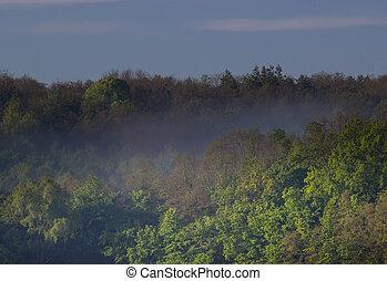 summer morning on the river. mornning fog - summer morning...