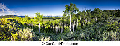 Summer morning panoramic view of Jackson Hole Valley in Wyoming