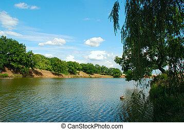 Summer morning - Pond. Near high green trees....