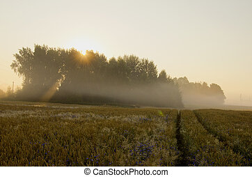 summer morning with mist