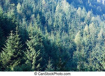 Summer mountain fir in sun rays landscape