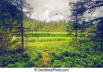 Summer mountain lake forrest - Summer mountain lake ...