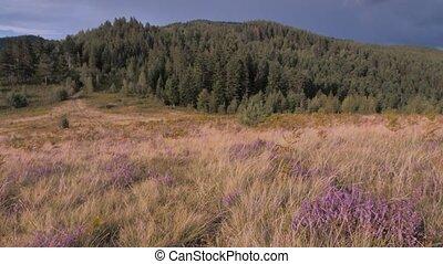 Summer mountain landscape. Summer in mountains. Green hills...