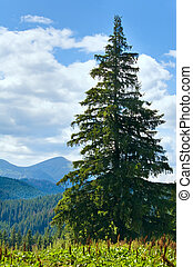 Summer mountain landscape with big fir tree on Goverla Mount background