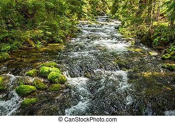 Summer mountain stream in the forest