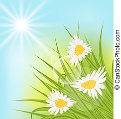 Summer nature background with daisy, grass, blue sky, sunny rays