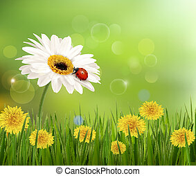 Summer nature background with ladybug on white flower. Vector.