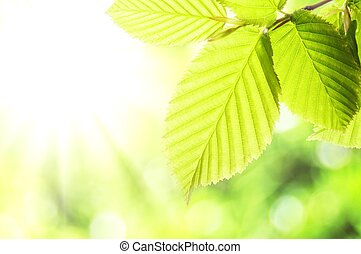 nature - summer or spring nature concept with green leaves ...