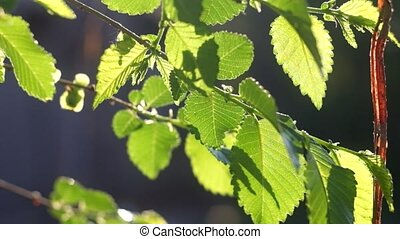 Summer or spring nature concept with green leaves backlit fhd footage
