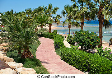 Summer palm trees on the coastal promenade overlooking the red sea, travel concept in Egypt, Sharm El Sheikh