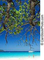 Summer paradise, Tree stretching over beach towards