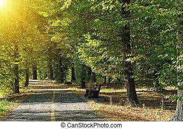 Summer park in sunset rays