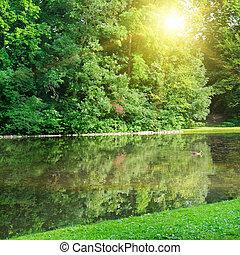 Summer park, river, sunrise