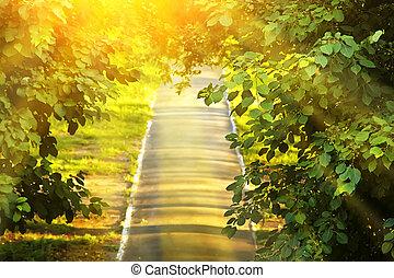 Summer park road