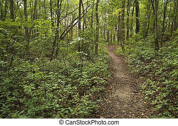 Summer Path - A hiking trail through the Summer woods in...