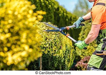 Summer Plants Maintenance