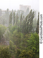 Summer pouring rain in the city