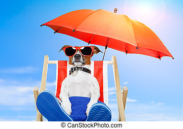 summer prázdniny, pes, prázdniny