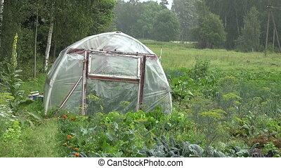 Summer rain in farm garden on plastic  greenhouse