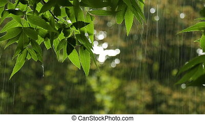 Summer Rain in the Forest