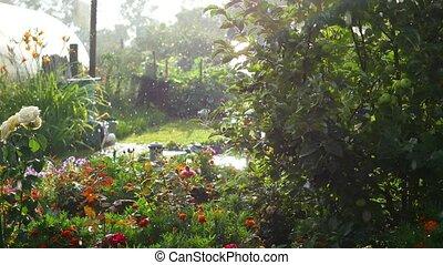 summer rain in the Park on a Sunny day