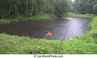 summer rain on pond in forest