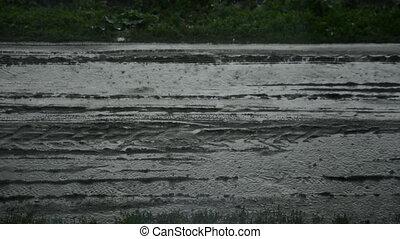 Summer rain on the road