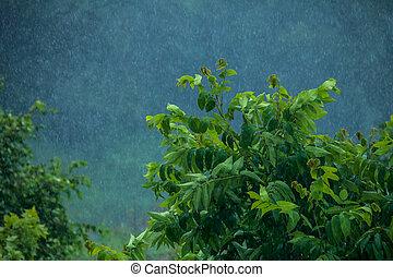 Summer rain. Rain drops in meadow.