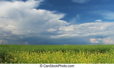 Summer - Rape field with beautiful clouds