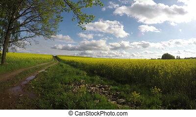 summer rapeseed field road