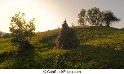 Summer rural landscape. Summer sunset in the village. Green...