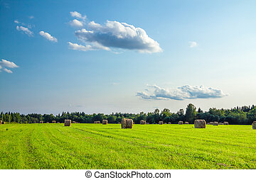 rural landscape with a field and hay