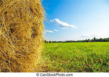 summer rural landscape with a field and hay