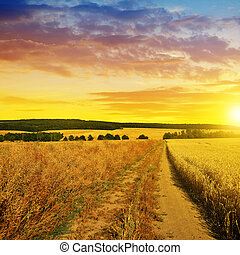 Summer rural landscape with dirt road at sunset.