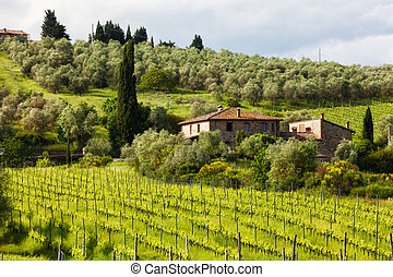 Summer rural landscape with vineyards and the house in Tuscany, Italy