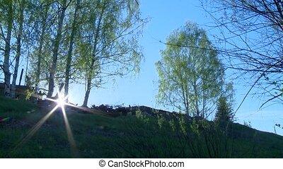 Summer russia village with birch vs blue sky