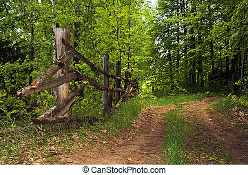 scene in the forest (countryside road and fence)