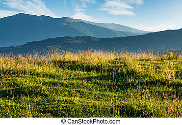 summer scenery of grassy field in mountains