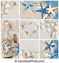 summer seashells - Collage of summer seashells
