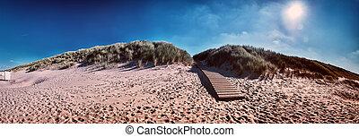 Summer seaside landscape with sand dunes. North sea coast