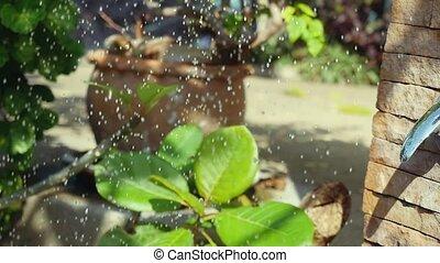 Summer shower water spray in beautiful garden in slow...