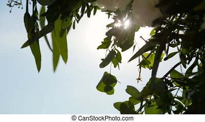 Summer sky and the leaves of trees.