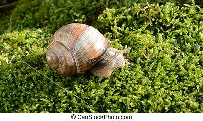 snail on green moss - summer snail on green moss