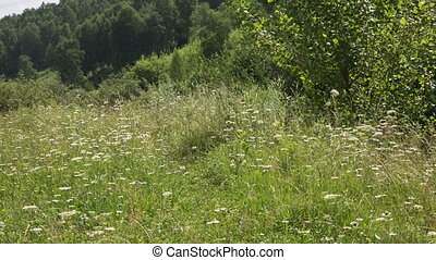 Summer - Panorama of summer landscapes