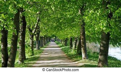 Summer stroll through the green park. The main avenue.