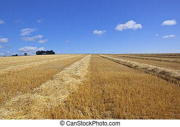 summer stubble field
