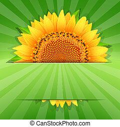 Summer sunflower poster template