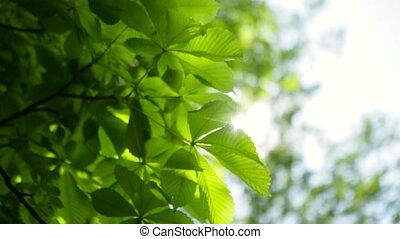 Summer sunny green tree background.